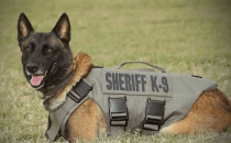 K-9 Chucky killed in line of duty