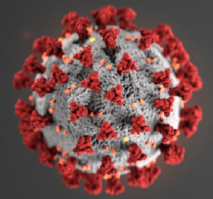 photo of the coronavirus