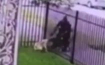 Detriot police officer shooting dog